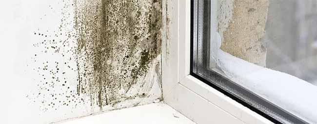 leaky-windows-header